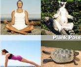 看动物们为你倾情演绎瑜伽标准动作~