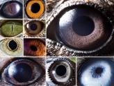 你认得出是哪个动物的眼睛吗?